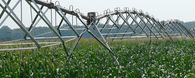 Delaware corn irrigation