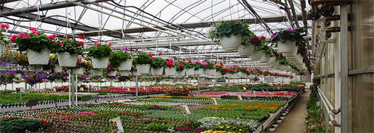 Nursery Green House